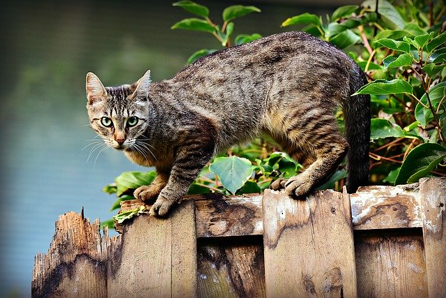Kissen Katze