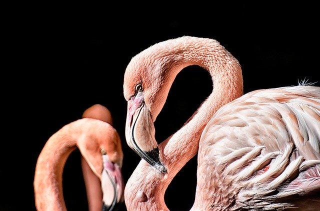 kissen flamingo